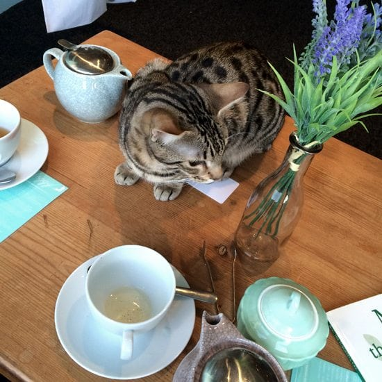 cat cafe edinburgh scotland Maison de moggie