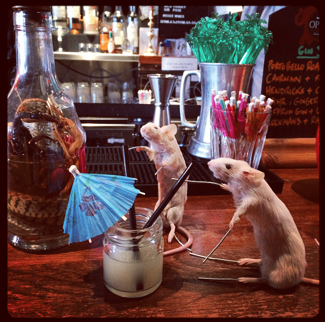 taxidermy mice drinking at paradise palms diy class margot magpie review