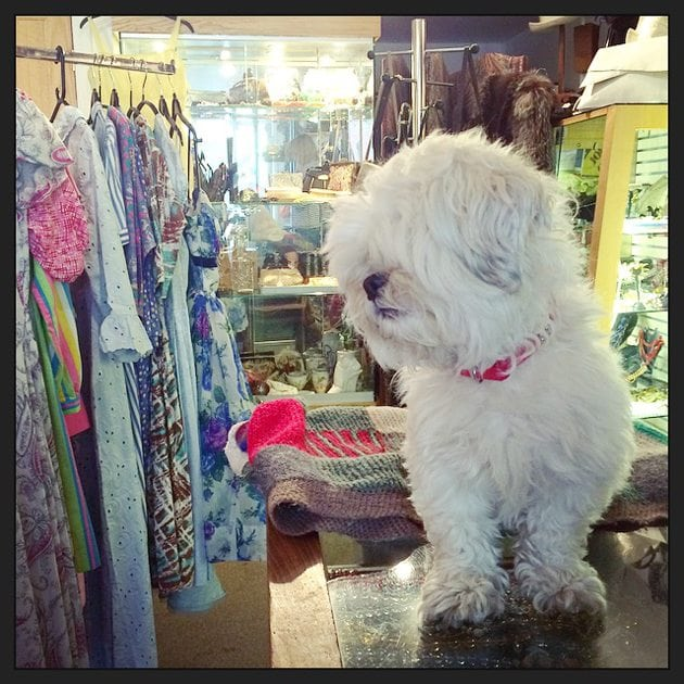 daisy the vintage loving dog