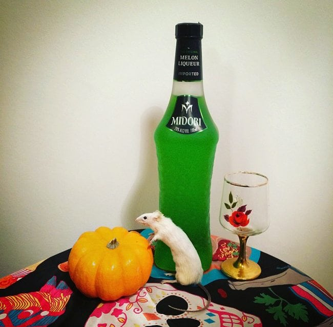 midori halloween party cocktails