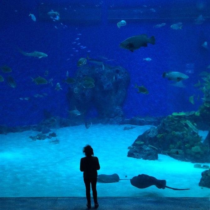 copenhagen aquarium review things to do blog post